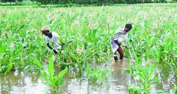 farmers with crops in rain_0_1_0_0