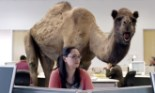 geico i d say happier than a camel on wednesday download the hump day