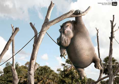 Hippo poses in Wellington Zoo Chimp Week print ad