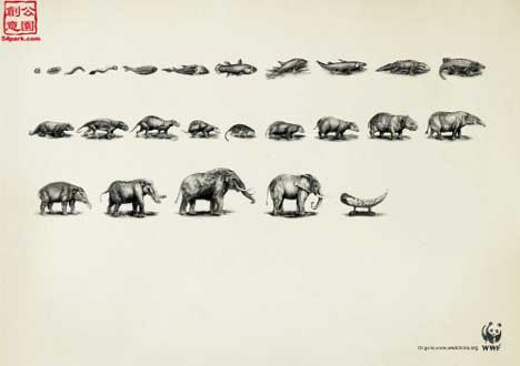 Elephant in WWF evolution cycle
