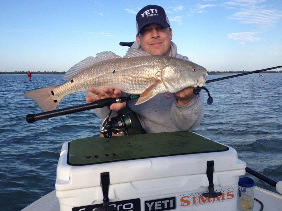 pine island sound fishing report redfish everywhere the