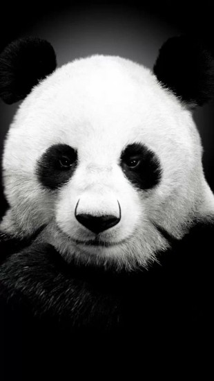 Wallpaper Cute Plain Panda Face The Iphone Wallpapers