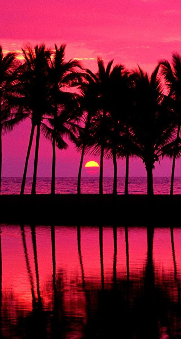 Hawaii Desktop Wallpaper Hd Pink Sunset With Palm Trees The Iphone Wallpapers