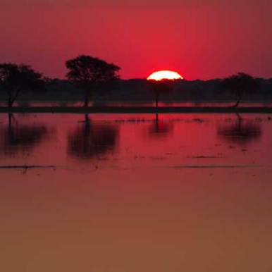 the_island_chobe_sunset