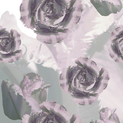 tiger-cloud-tulip_mauve-grey-Alpha-Workshops