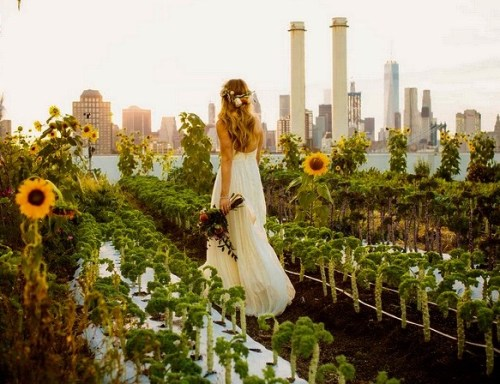 Green-roof-wedding