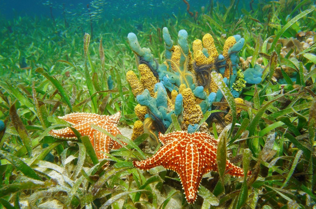 Underwater Life With Sponges And Starfish Jigsaw Puzzle In
