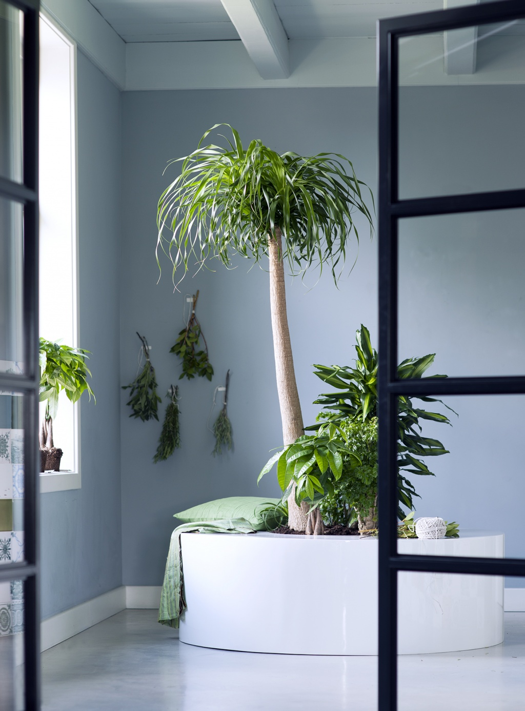 Interieur Met Hangplant Indoor Trees Are The Houseplants For January The Joy Of