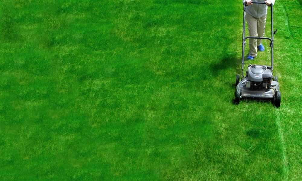 lawn care business names xv-gimnazija