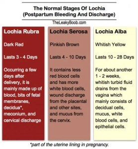 The Stages of Lochia table image