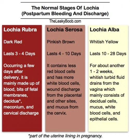 Normal Postpartum Bleeding and Discharge and the Return of ...