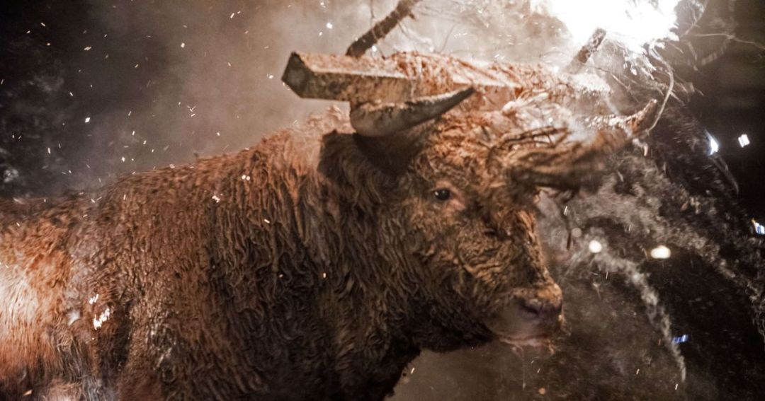 A bull is seen with its horns on fire during the Toro de Jubilo
