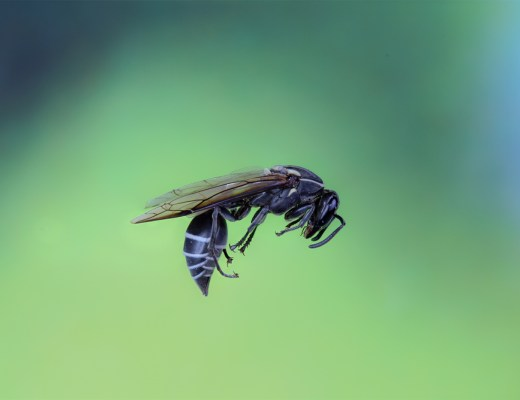Wasp Venom Might Be The End Of Cancer