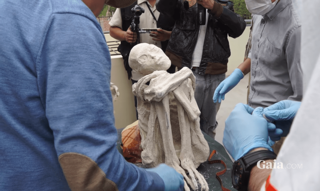 One of the mummified aliens found in the Nazca desert of Peru - Gaia