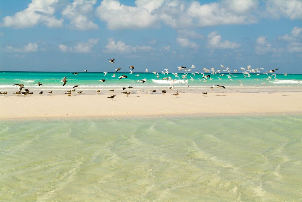 Birds at the beach of Qalansiya on the island of Socotra,