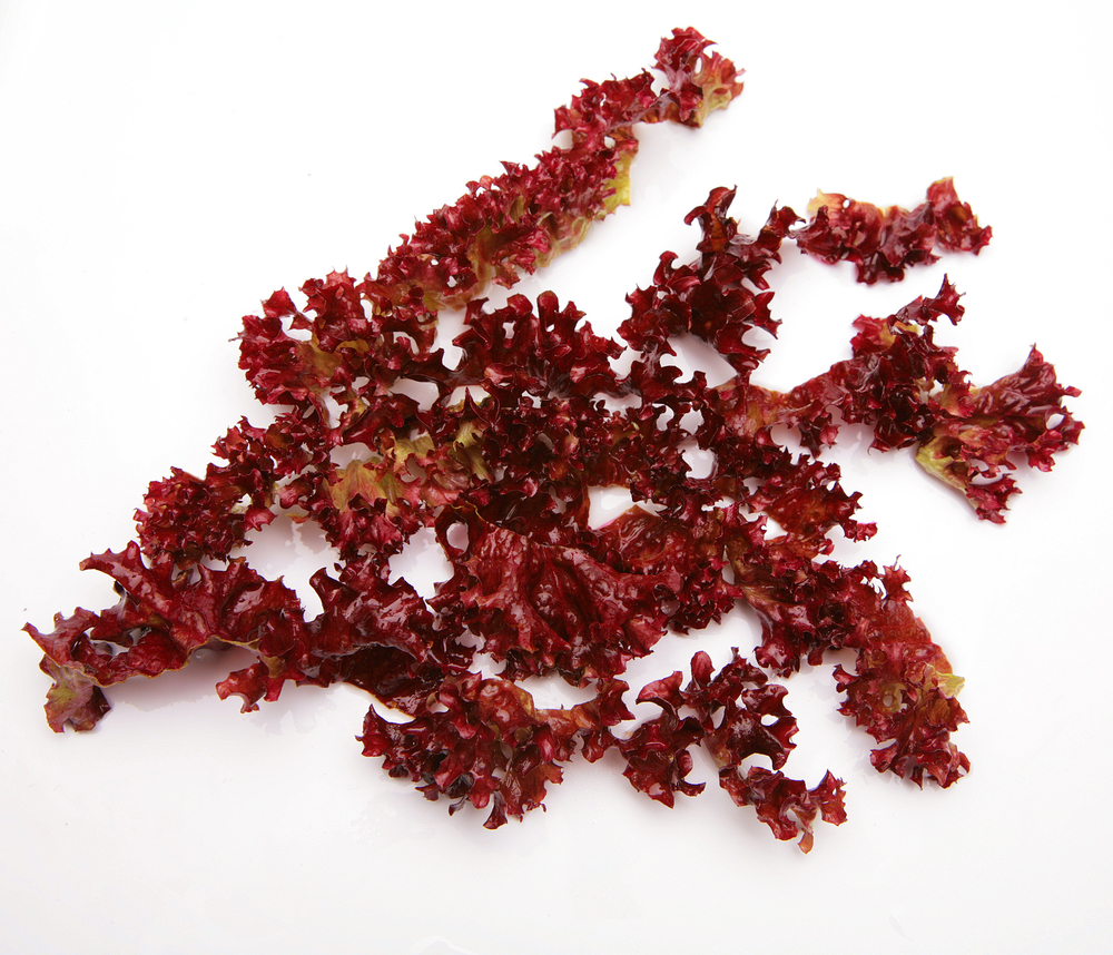 this red algae is a strain of seaweed that tastes like bacon