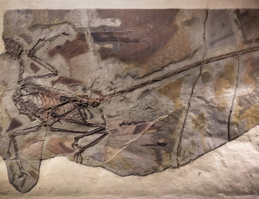 Scientist have found oldest dandruff on feathers from microraptor dinosaurs