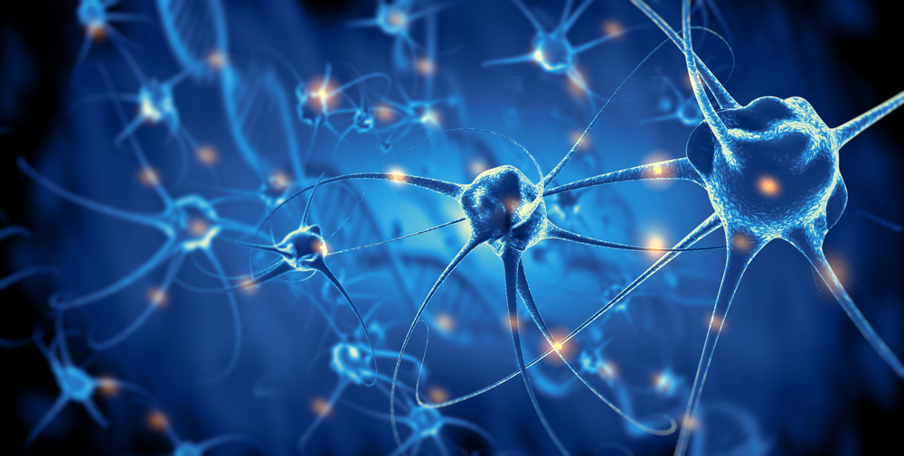 scientists have discovered the rosehip neurons, a new type of brain cell in human brain