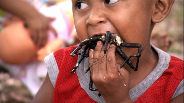Image result for spider eating skuon