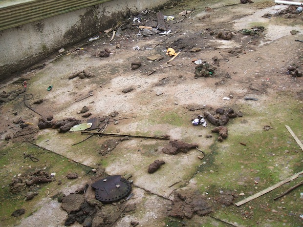 The mess found within Purdey's garden.