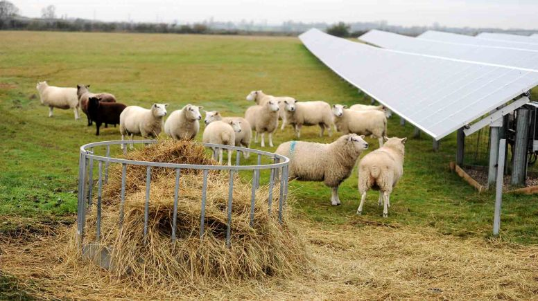 Green energy company Freewatt have announced plans to expand their solar farm to 14MW in West Lindsey.