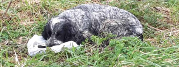 The RSPCA are searching for the owners of the abandoned pup.