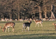 Do you know how the deer came to be free? Photo: The Lincolnite