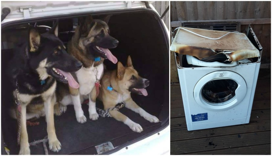 The home owner had lost all three of his pets.