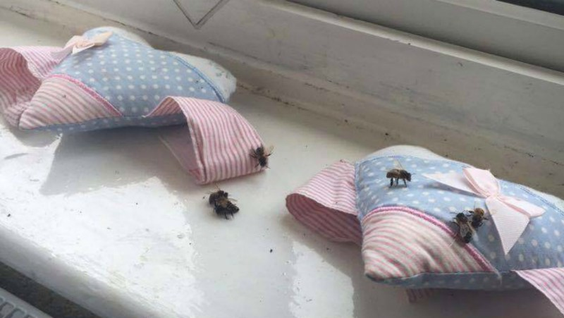 The bees went into the Toni's three year old daughter's bedroom