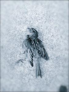 Beloved bird flew the coop.