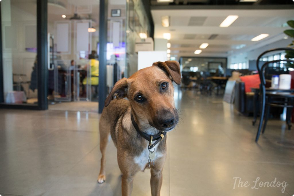 Tuesday Office Dog Pat The Space Dog Of Virgin Galactic