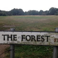 The Forest E11