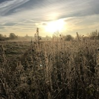 Wanstead Flats covered in frost