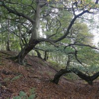 Weald Iron Age Fort and Stukeley's Druid Temple