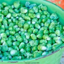 thumbs bucket of brussel sprouts University Farmers Market Early Fall 2011