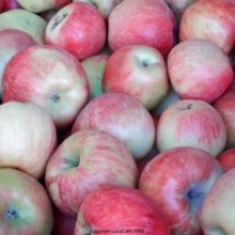 thumbs honeycrisp apples University Farmers Market Early Fall 2011