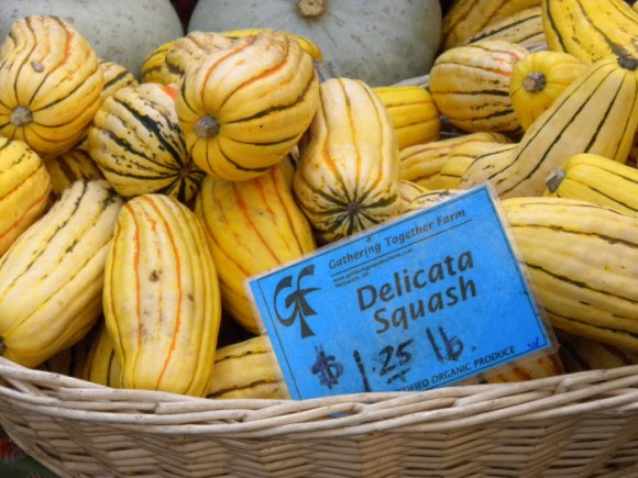 Delicata Squash Getting Started
