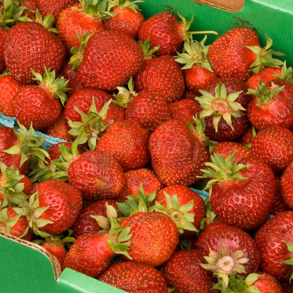hood strawberries hillsdale market 2 Fresh Strawberry Roundup