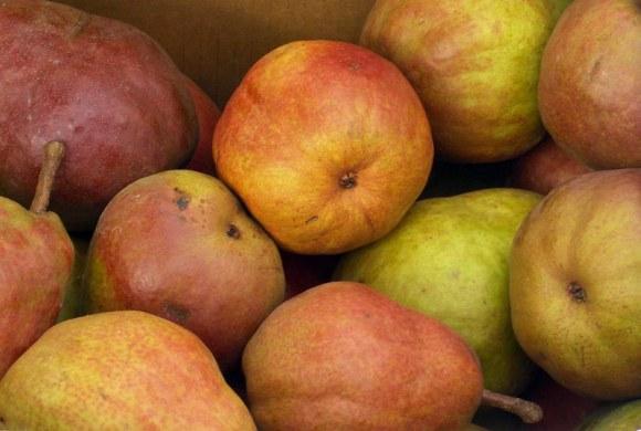 Hood River Pears 2 Pear Primer