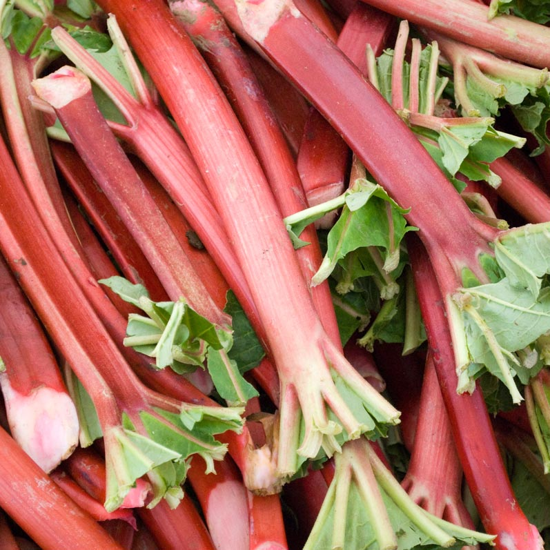 Northwest Field Rhubarb from Portland Farmers Market