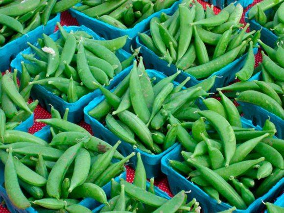 Sugar Snap Peas Northwest Fresh: Portland Farmers Market Spring 2009