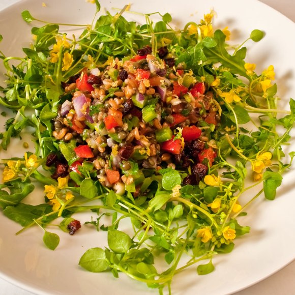 Salad serving 2 Northwest Early Spring Farro & Lentil Salad