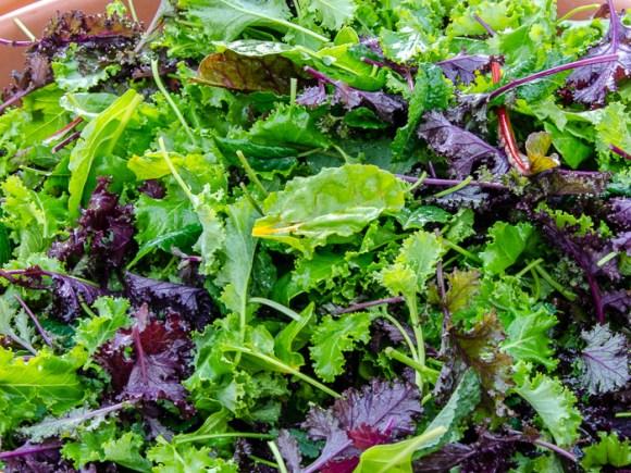 Portland Farmers Market Opening Day 2014: Braising Greens