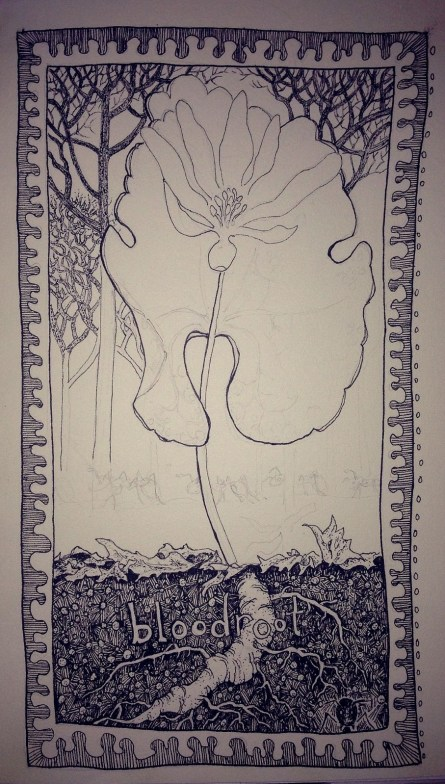bloodroot in micron pens