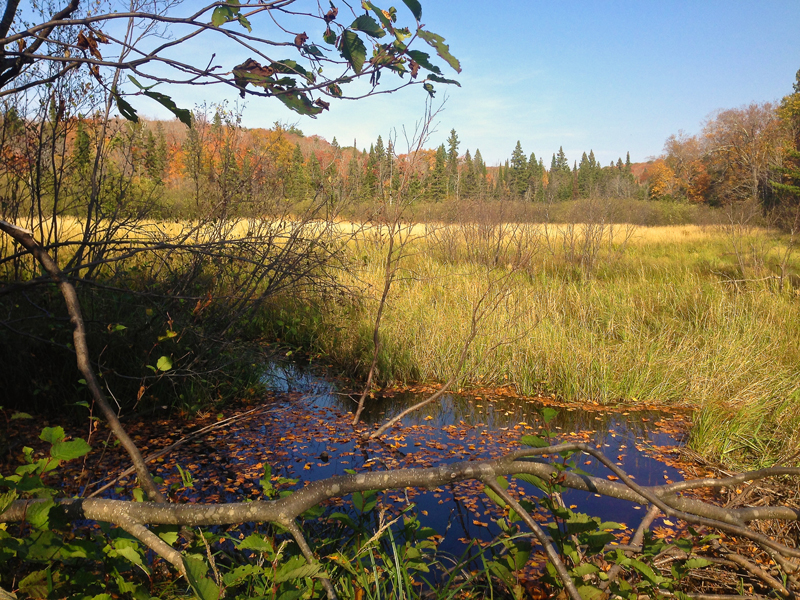 Beaver Pond on the Little Carp River in the Porcupine Mountains