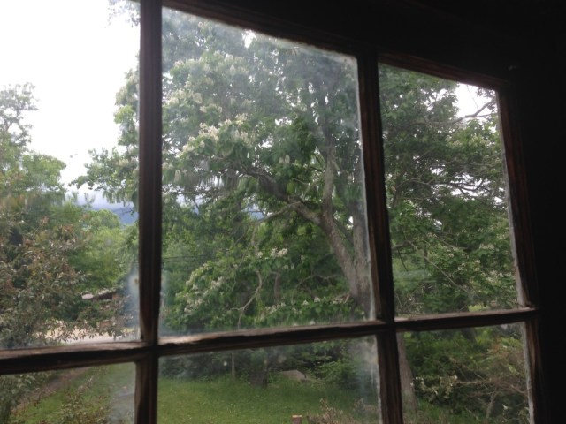 Old Window View of Even Older Catalpa Tree