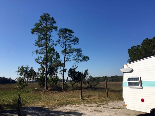 Shasta spreads her wings at campsite #35, Little Talbot Island State Park Campground