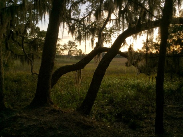 Live Oaks at the edge of the Marsh, Little Talbot Island State Park Campground, Florida