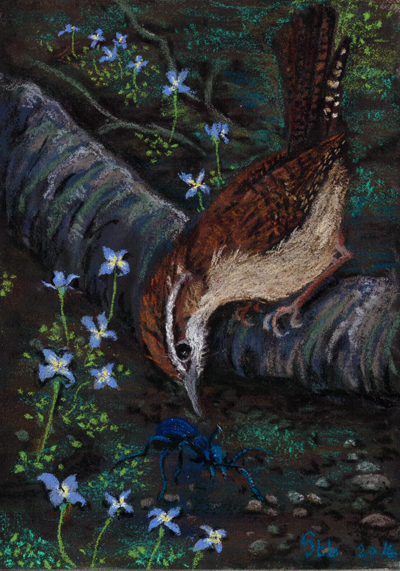 Culinary Decisions: a pastel painting of a wren contemplating a blue blister beetle among bluets, by Stephanie Thomas Berry