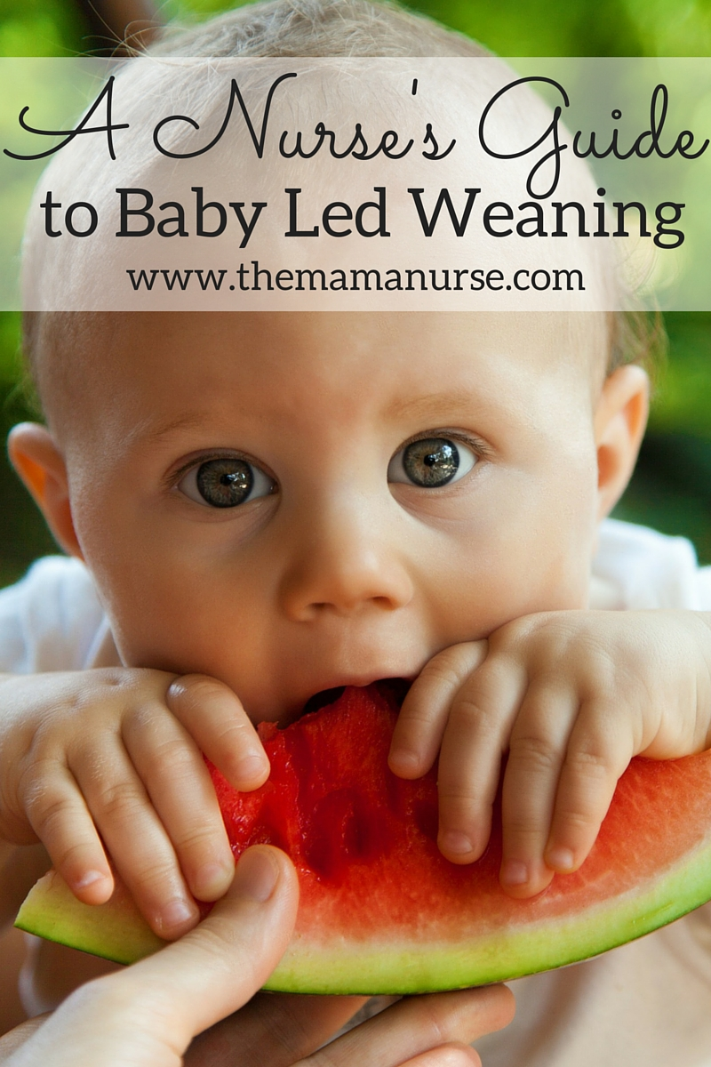 A Nurse's Guide to Baby Led Weaning